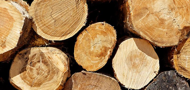 Meubles bois massif de la Compagnie du hêtre
